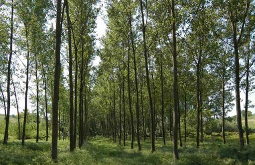 Nuovo Regolamento Regionale per la forestazione