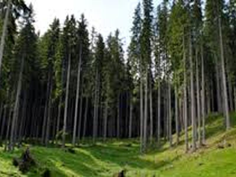 Forestazione, Gallo: «mancano i fondi del governo, il settore rischia il collasso»