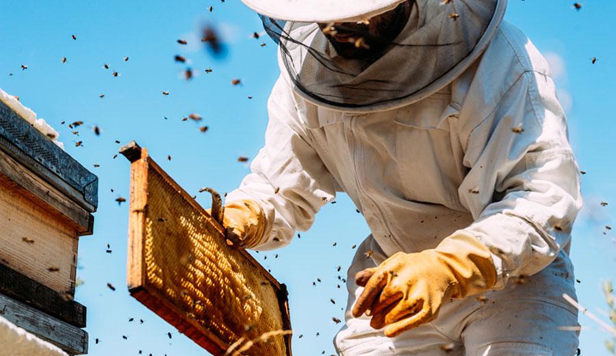Psr, in arrivo 450mila euro per gli apicoltori calabresi