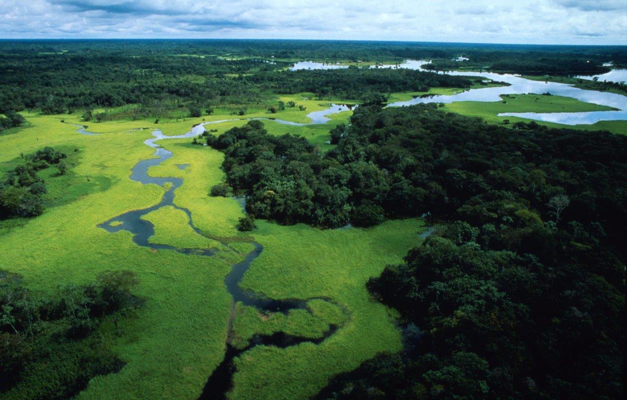 Europa Verde: Vietiamo il disboscamento delle foreste. Firma la petizione