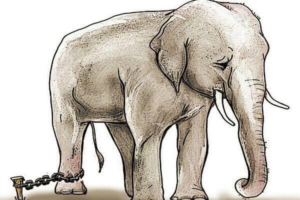 La parabola dell'elefante incatenato di Jorge Bucay