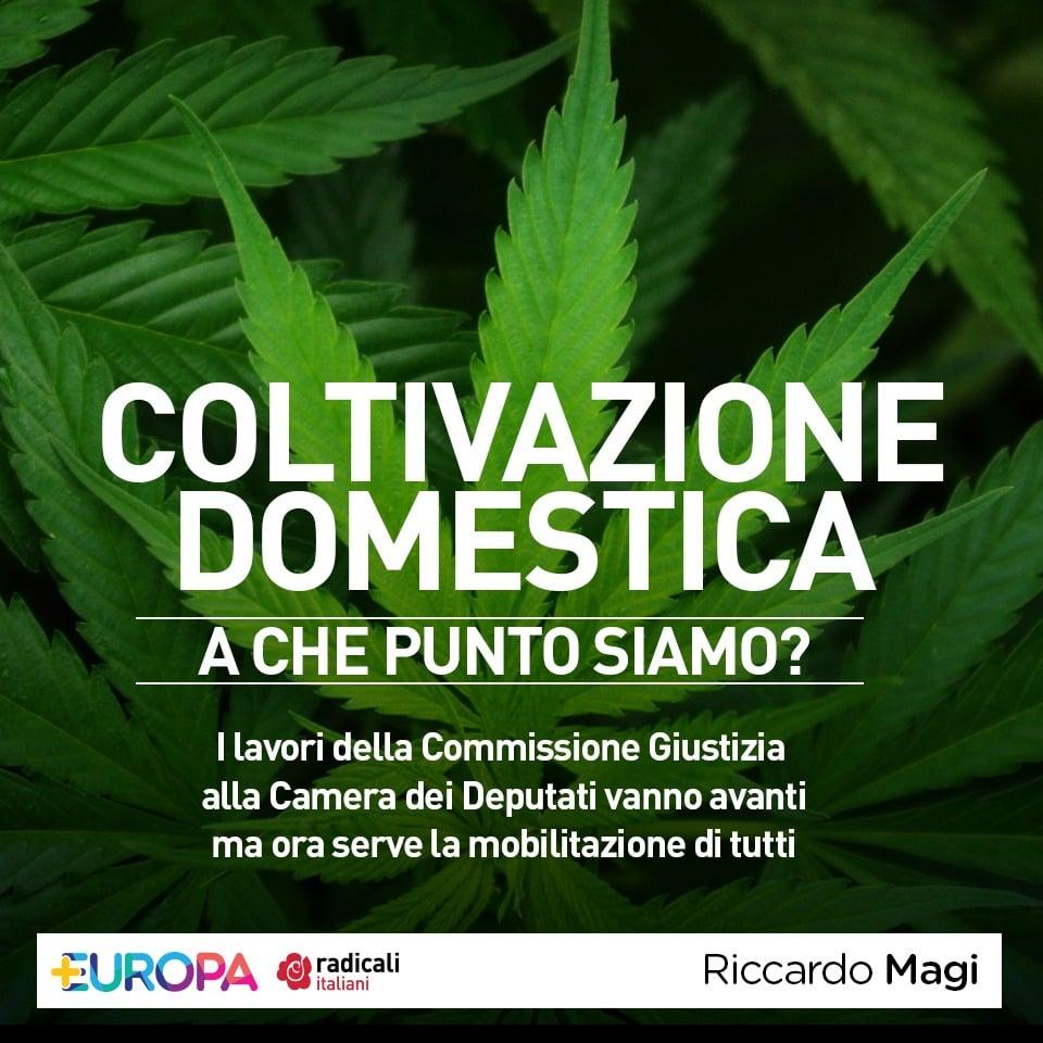 Coltivazione domestica della Cannabis: News dalla Commissione Giustizia della Camera dei Deputati