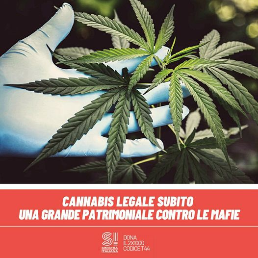 """Fratoianni (Sinistra italiana): """"Cannabis legale subito"""""""