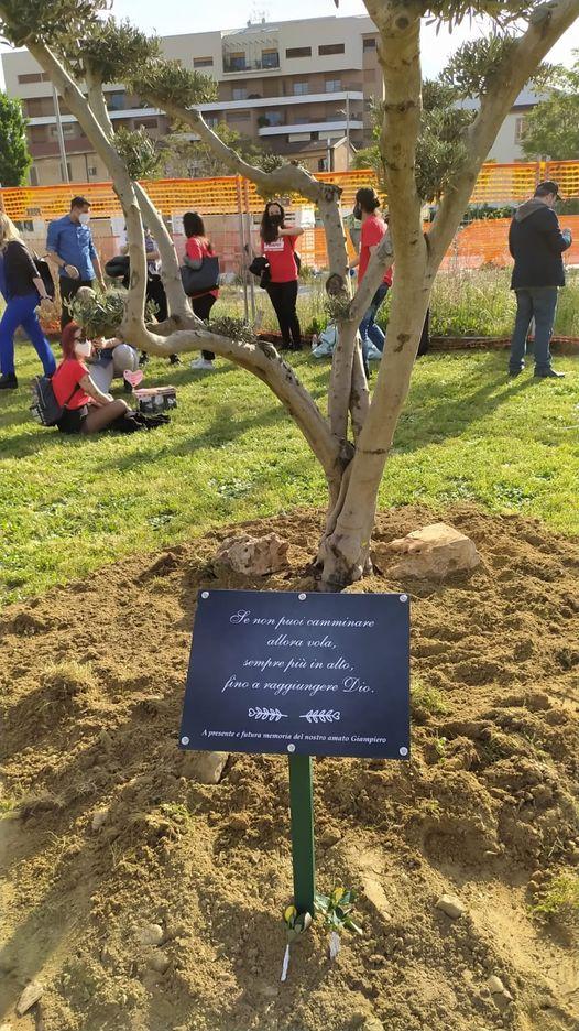 Le radici dell'ulivo in ricordo di Giampiero crescano forti così come la Verità e la Giustizia