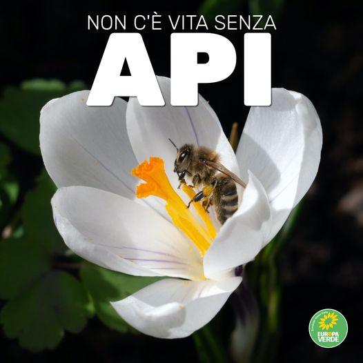 """Giornata Mondiale delle Api, Europa Verde:"""" salviamo le api e gli agricoltori"""""""