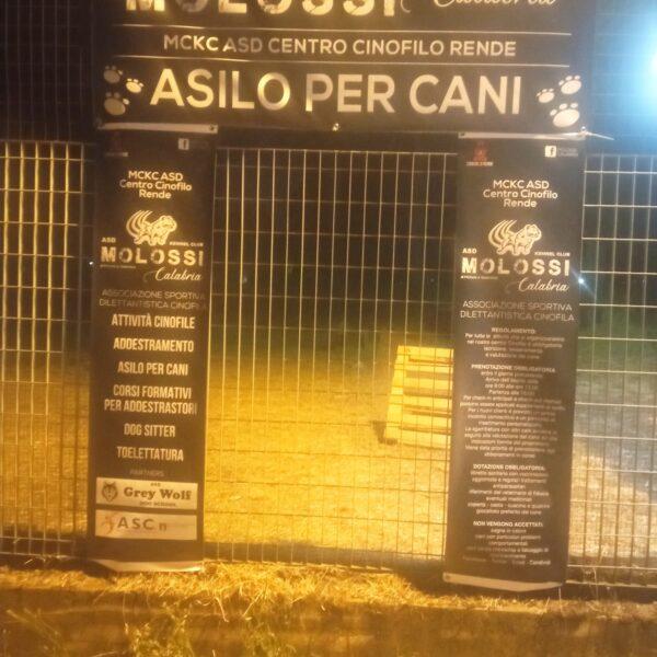 """Rende: Inaugurato l'Asilo per cani """"Molossi Calabria"""""""