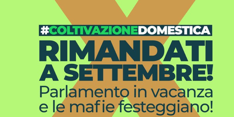 Cannabis: La Destra e Renzi chiedono il rinvio a settembre. E le mafie festeggiano