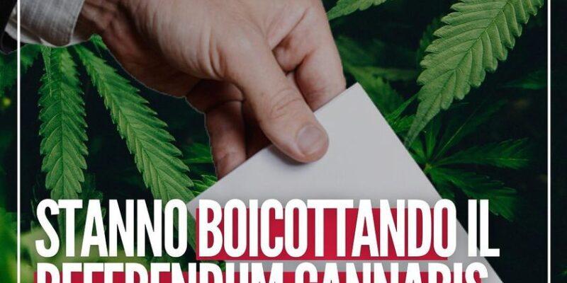 """Cannabis, la denuncia di Roberto Saviano: """"Vogliono fermare il Referendum"""""""