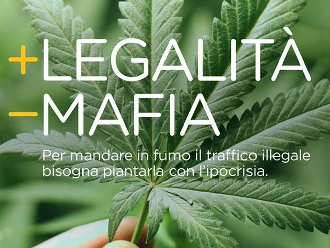 Cannabis: la depenalizzazione assesta un duro colpo alle Mafie. Ma per Salvini e Meloni questo non è importante(chissà perché?)